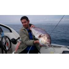 Vue 5 : Top Sea Slow Squid