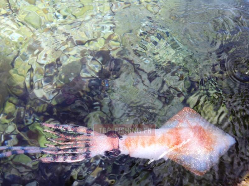 Vue 4) Leurre souple Top Sea SquidArt Krak 250gr