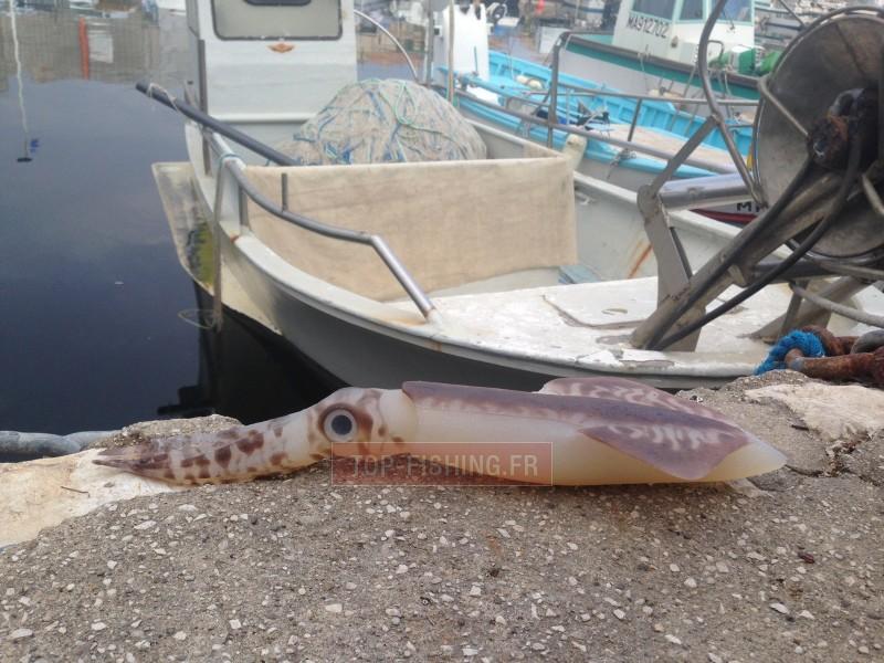 Vue 3) Leurre souple Top Sea SquidArt Leviatan 550gr
