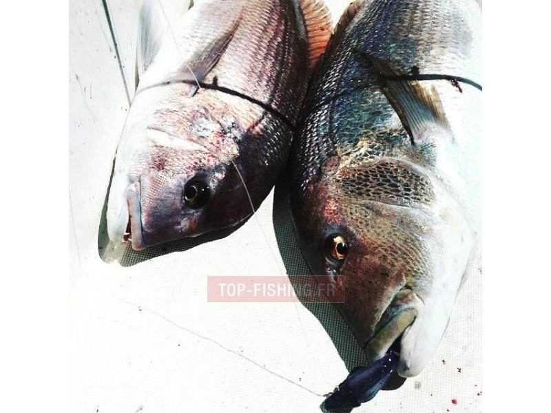 Vue 2) Leurre Bull Shark Kraken (Realis Squid Lure)