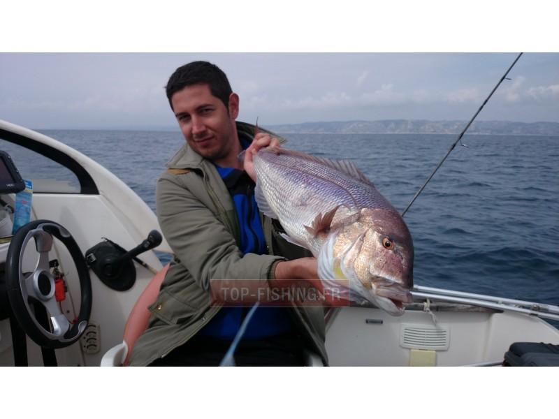 Vue 5) Top Sea Slow Squid