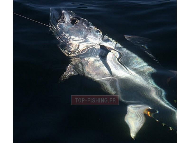 Vue 2) Top Sea Tuna teaser