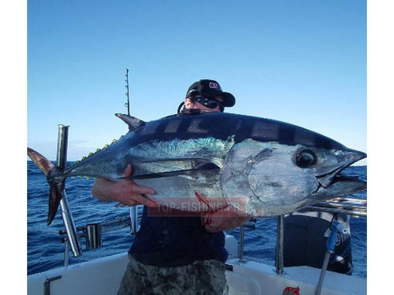 Vue 3) Top Sea Tuna teaser