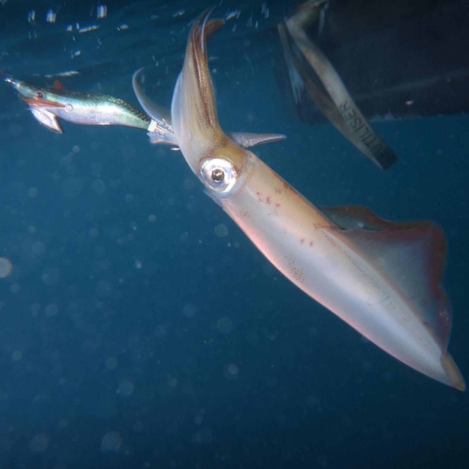 La pêche sur ijme
