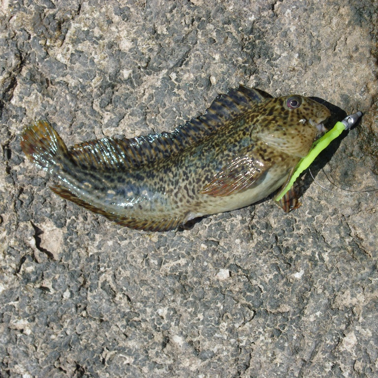 Identifier les poissons p che en mer - Grand poisson de mer ...