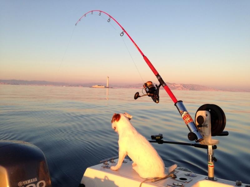 Downrigger une pêche profonde très cool