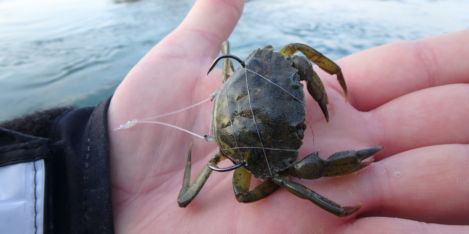 """Résultat de recherche d'images pour """"montage crabe wishbone"""""""