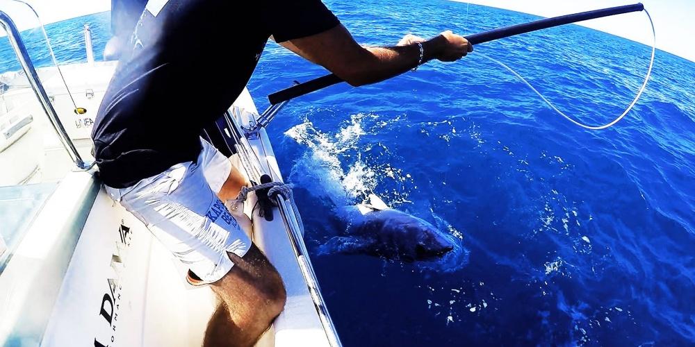 Fishing Azura, client Top Fishing en pêche au thon près de marseille