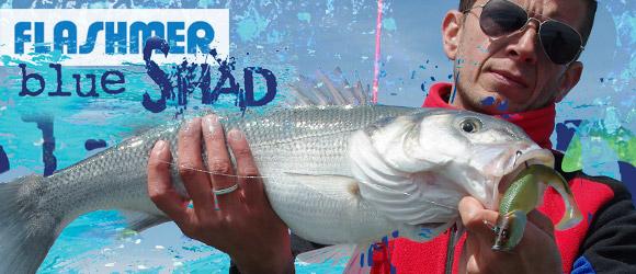 Pêche en Bretagne : le Blue Shad Flashmer à l'essai