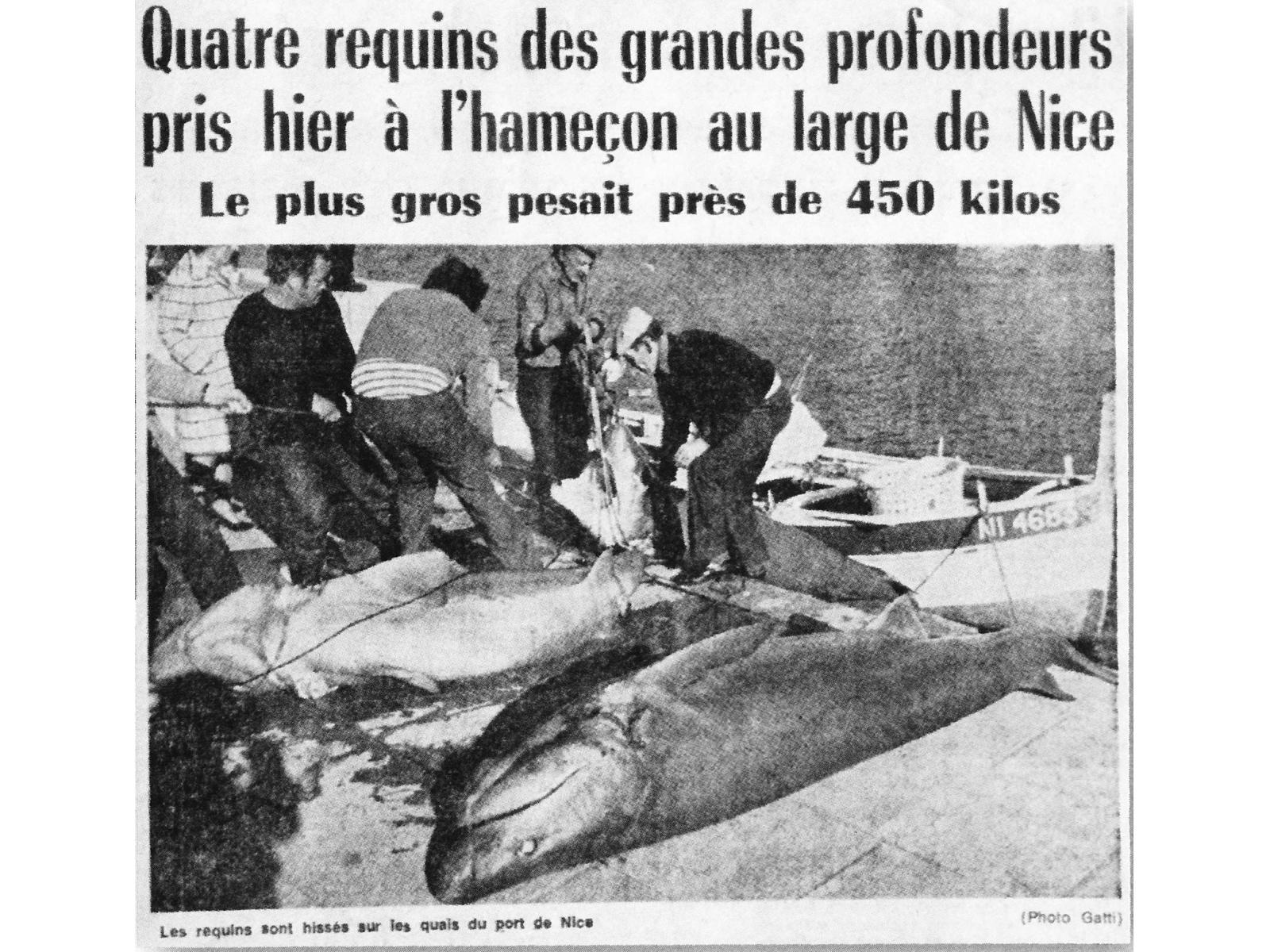 Auparavant, les requins grisets étaient pêchés à la palangre par des professionnels (extrait d'un Nice Matin des années 70)
